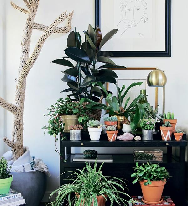 tvorchestvo - Городские джунгли. Размещаем растения в интерьере - лайфстайл