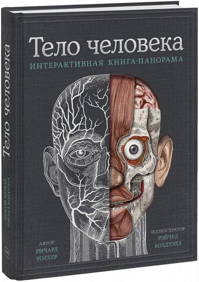 detskij-non-fikshn - Тело человека. Интерактивная книга-панорама -